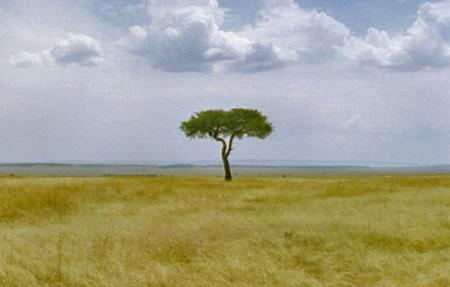Афоризмы и мысли о жизни человека на Земле