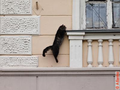 Прыжок пушистого кота на окно. Фотография