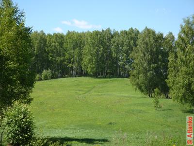 Леса и поля россии скачать 1600x1200 1 25