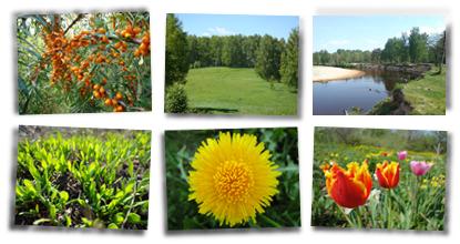 На природе: цветы, деревья, леса, поля... Фотографии природы России - русские просторы