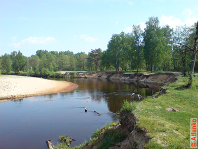 На берегу небольшой лесной реки в летний день. Фотография